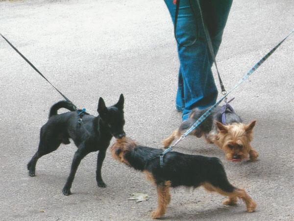 dog-walking-gallery-2